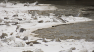 Staying home today? Here's a look at the river