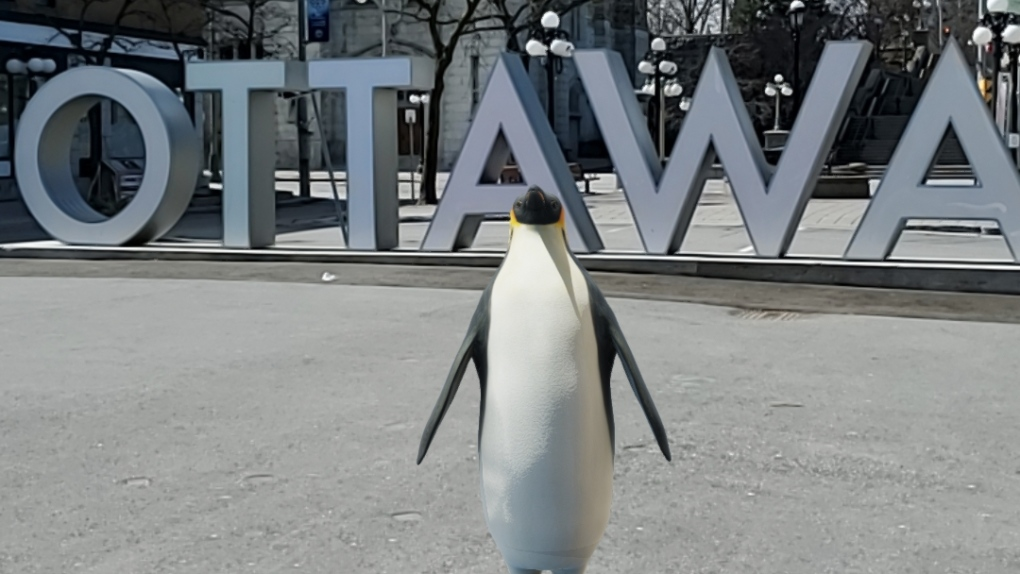 Google AR in Ottawa