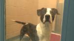 puppy dog human society adopt