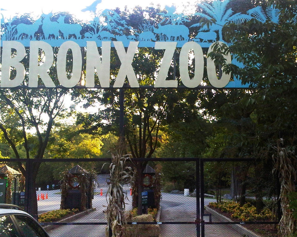 FILE - This Sept. 21, 2012, file photo shows an entrance to the Bronx Zoo in New York. A tiger at the zoo has tested positive for the new coronavirus. It's believed to be the first infection in an animal in the U.S. and the first known in a tiger anywhere, the U.S. Department of Agriculture said Sunday, April 5, 2020. The zoo says all the animals are expected to recover. (AP Photo/Jim Fitzgerlad, File)