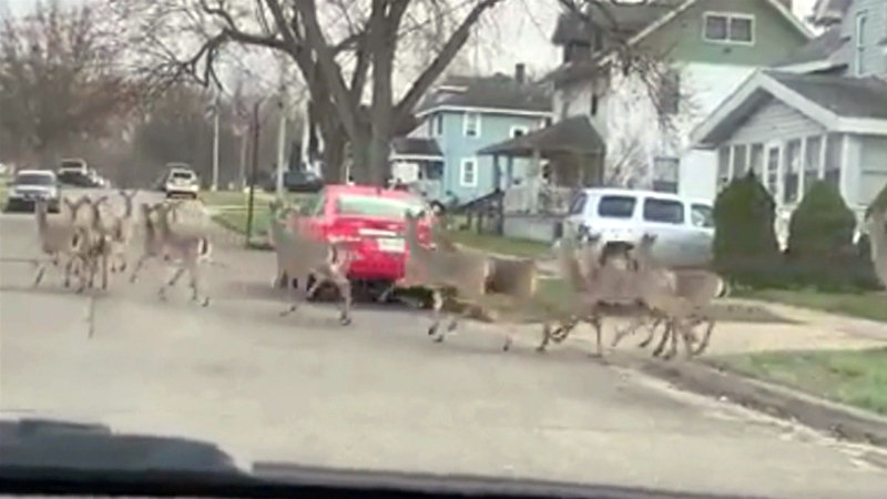 'OK, there are so many deer here'