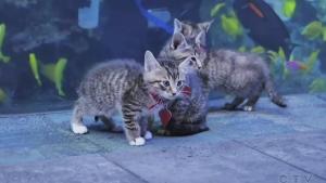 Kittens explore closed Georgia Aquarium