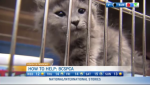 BC SPCA, hot to help charity