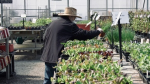 Garden Centres across Vancouver Island say there has been a dramatic increase in interest for home fruit and vegetable plant starts: April 8, 2020 (CTV News)