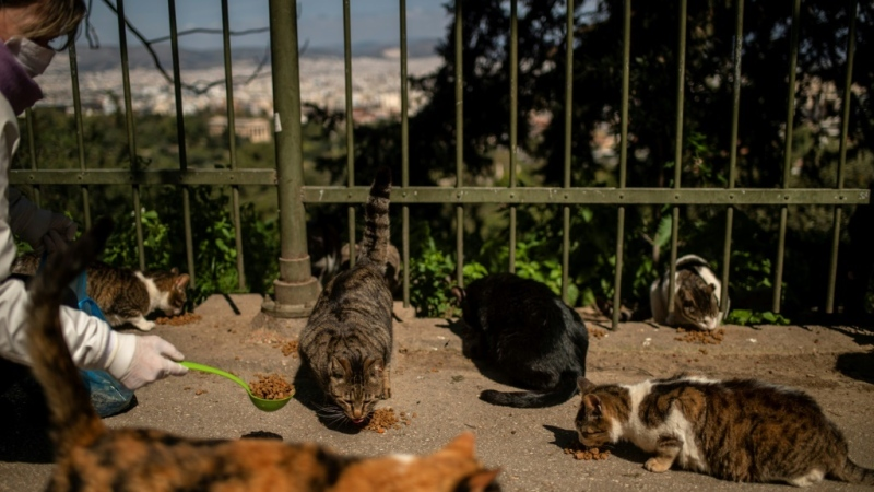 European authorities are realising that allowances must be made for populations of stray animals. (AFP)