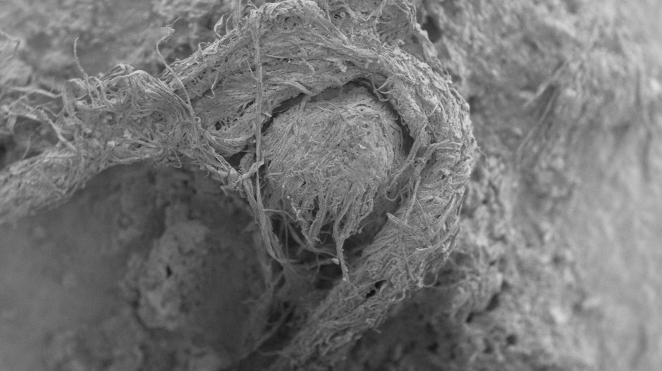 This electron microscope image provided by Marie-Helene Moncel in April 2020 shows part of a Neanderthal cord from Abri du Maras, France. (M-H. Moncel via AP)