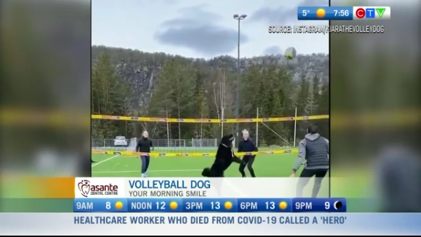 Morning smile, volleyball dog
