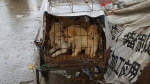 An estimated 10 million dogs are killed each year for China's dog meat trade, according to rights group Humane Society International. (AFP)