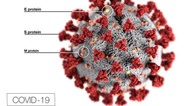 coronavirus illustration with labels