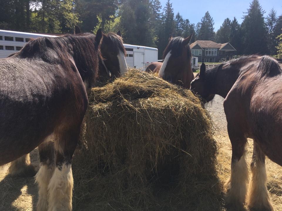Horses tally ho