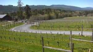 The Blue Grouse Winery located in the Cowichan Valley is shown: (CTV News)