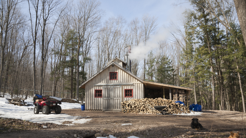 Northern Ontario maple syrup producer
