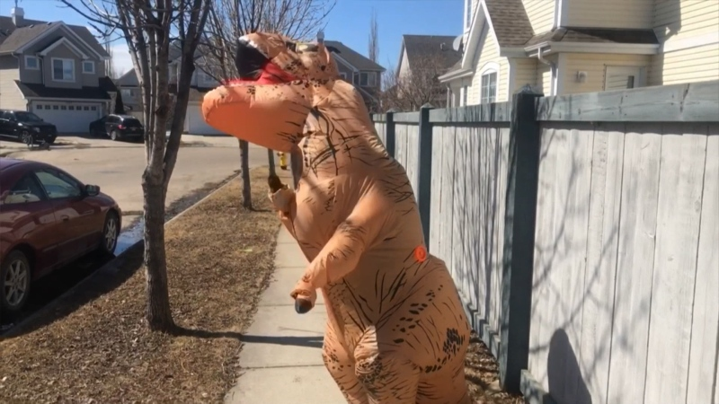 Mama Rex in Summerside, spreading cheer to residents during the pandemic. Tuesday April 21, 2020 (Dave Mitchell/CTV News Edmonton)