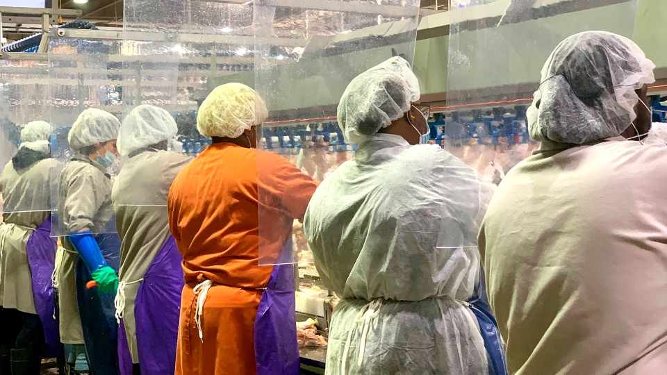 In this April 2020, photo provided by Tyson Foods, workers wear protective masks and stand between plastic dividers at the company's Camilla, Georgia poultry processing plant. (Tyson Foods via AP)