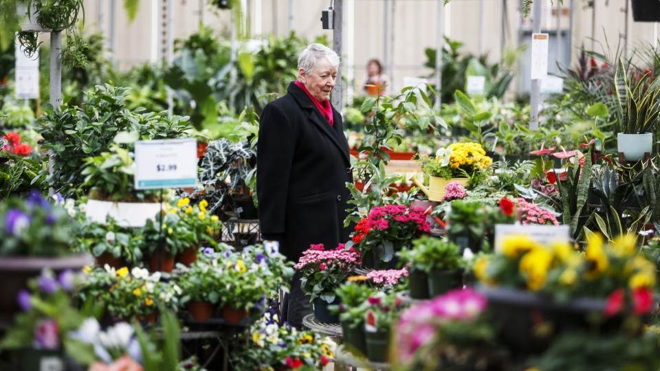 A woman is seen shopping at a garden centre in this undated photo. (The Canadian Press)