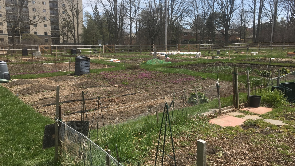 Community garden in London, Ont.