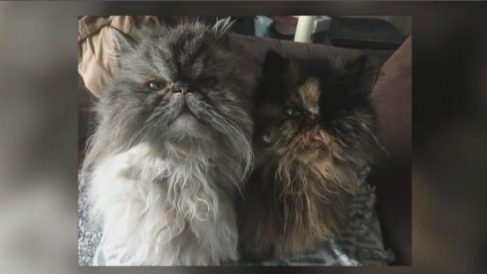 Luna and Nala cats adopted