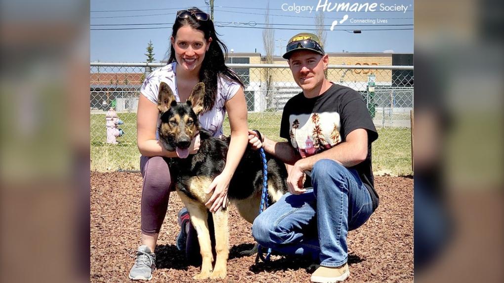 Calgary Humane Society dog
