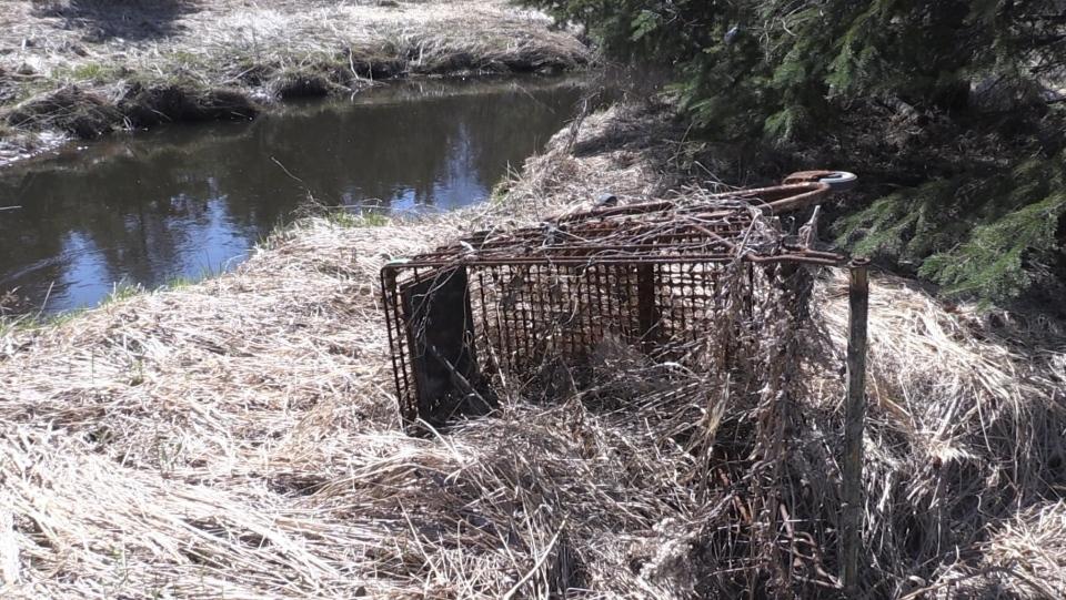abandoned shopping cart near Junction Creek