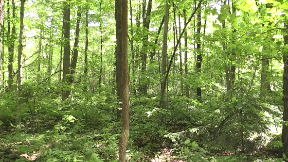 Ontario forest