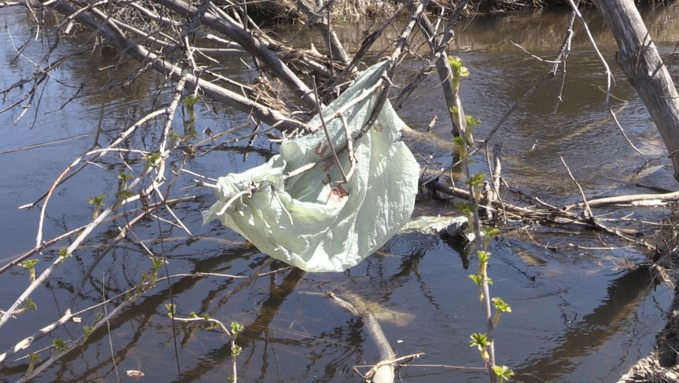 Single use plastics are ending up in Junction Cree