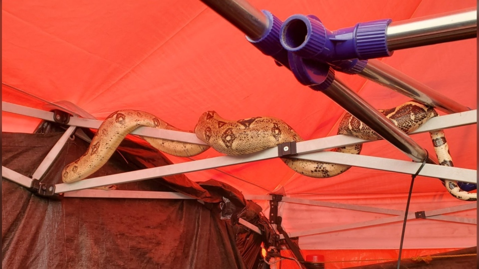 Among the items Vancouver police seized from Oppenheimer Park Friday was an eight-foot boa constrictor. (Vancouver Police Department)