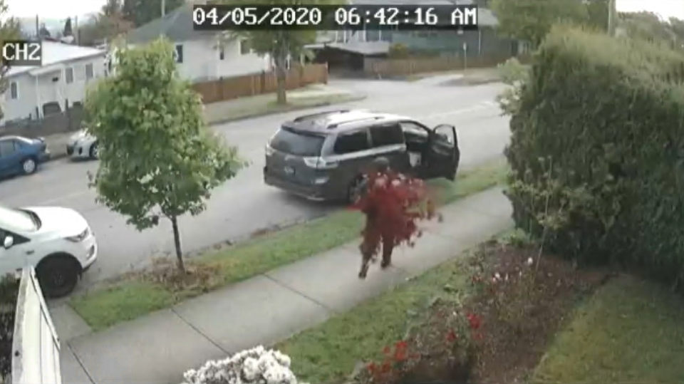 Caught on camera: Thief steals maple tree
