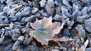 Frost is seen on the ground in this file photo. (Betty Price/MyNews)