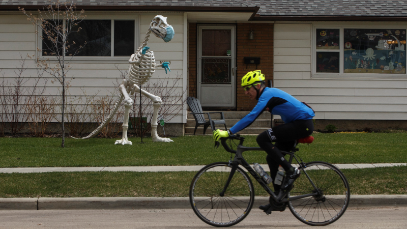 A cyclist rides past a dinosaur wearing a mask and gloves, during the COVID-19 pandemic, in Edmonton on Saturday, May 9, 2020. THE CANADIAN PRESS/Jason Franson