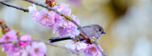 Bird on a blossoming tree