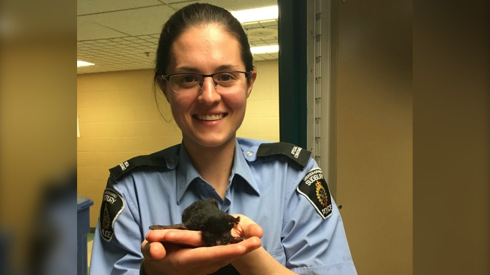 Greater Sudbury Police rescued four kittens from a dumpster in Greater Sudbury early Wednesday morning. (Supplied)