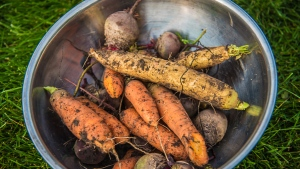 Winter vegetables from Debi Goodwin's garden can be seen in this image. (Debi Goodwin)