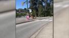 Dinosaur meets unicorn on B.C. street