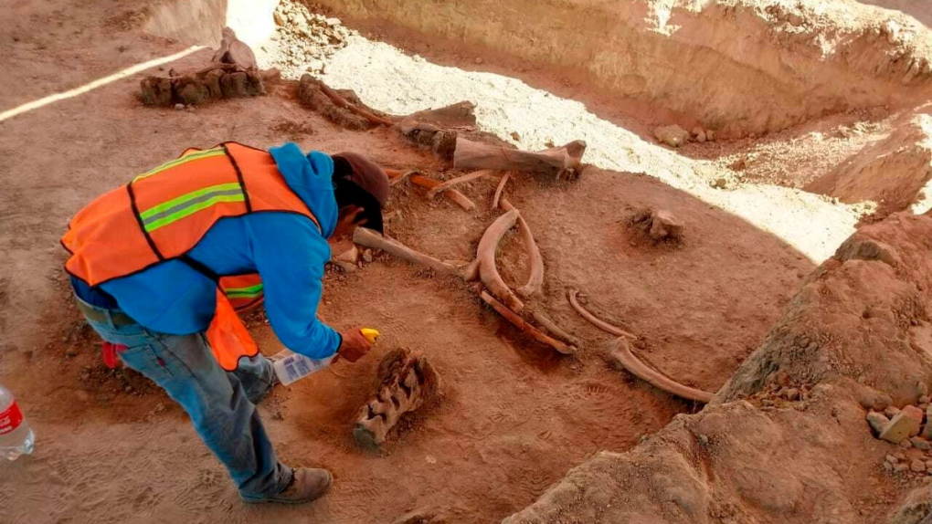 Excavating mammoth remains