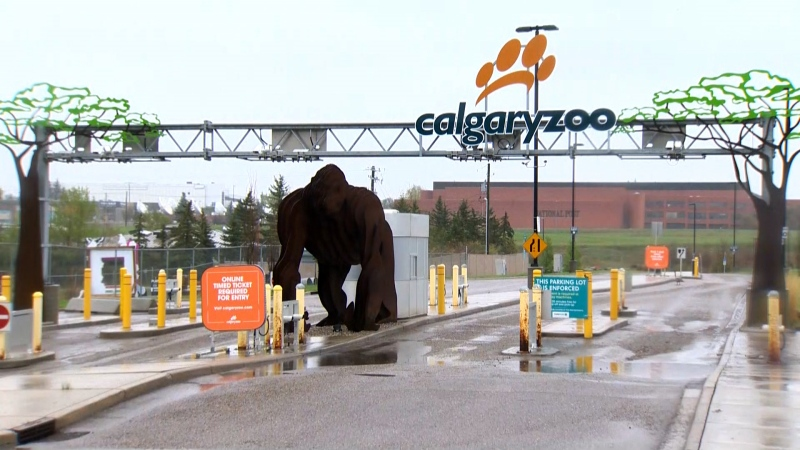 The Calgary Zoo reopened to the public on May 23. (File)