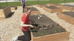 Community garden helping low income families