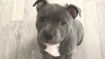CTV National News: Watch out for puppy scams