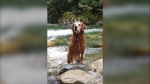 District of North Vancouver firefighters performed a daring rope rescue over a Lynn Creek waterfall Saturday, but weren't able to find a dog that had fallen into the creek above the falls. (Submitted)