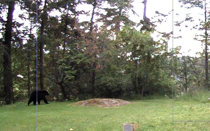 Another bear has been spotted in Saanich, not far from where sightings of a bear and cub prompted a warning from local police last week.