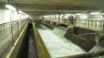 Wastewater testing