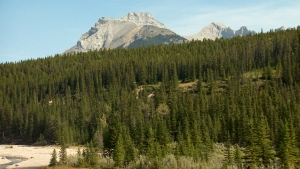 Alberta mountain scenic