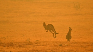 Australia's recent bushfires scorched an area larger than most nations, displaced thousands of people and killed an estimated one billion animals. (AFP)