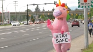 The unicorn has been lifting spirits around the Tri-Cities, and was most recently sighted in a Coquitlam intersection alongside a woman in a T-Rex costume.