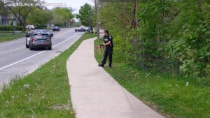 A Toronto police officer holds a baby deer in this video taken by a resident walking in the area.