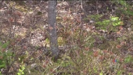 Dry weather makes N.S. forests dangerous