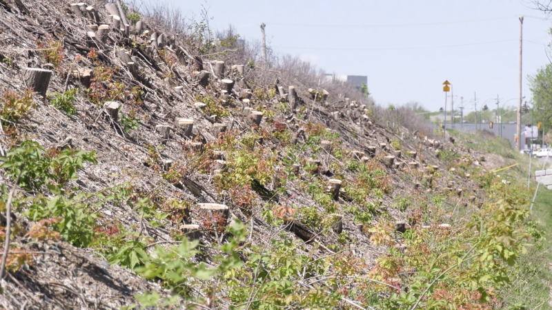 Clear-cutting along 33rd Street near train tracks  (Chad Leroux/CTV Saskatoon)