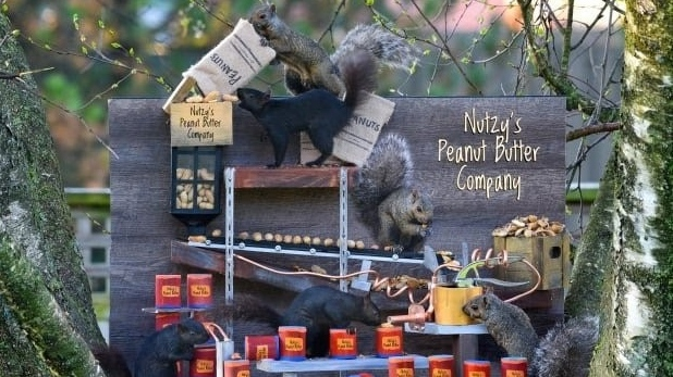 Squirrels explore a peanut butter factory in this image from photographer Daryl Granger taken in Simcoe, Ont. (Source: RoseLe Studio)