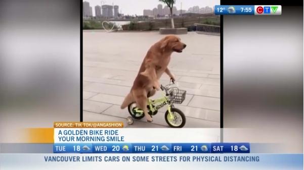 Morning smile, dog on bike