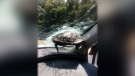 Turtle smashes through car windshield on highway