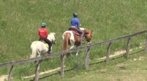 horse horseback riding